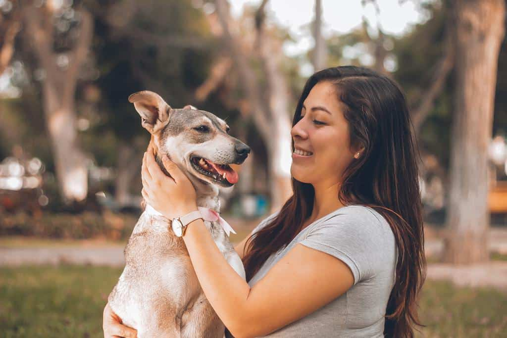 Tips for Bringing Along Your Pet
